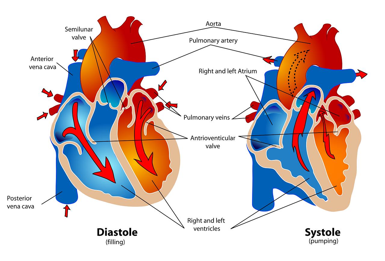 症状・疾患別受診すべき医療機関-⑨循環器の症状(循環器内科・心臓血管外科)