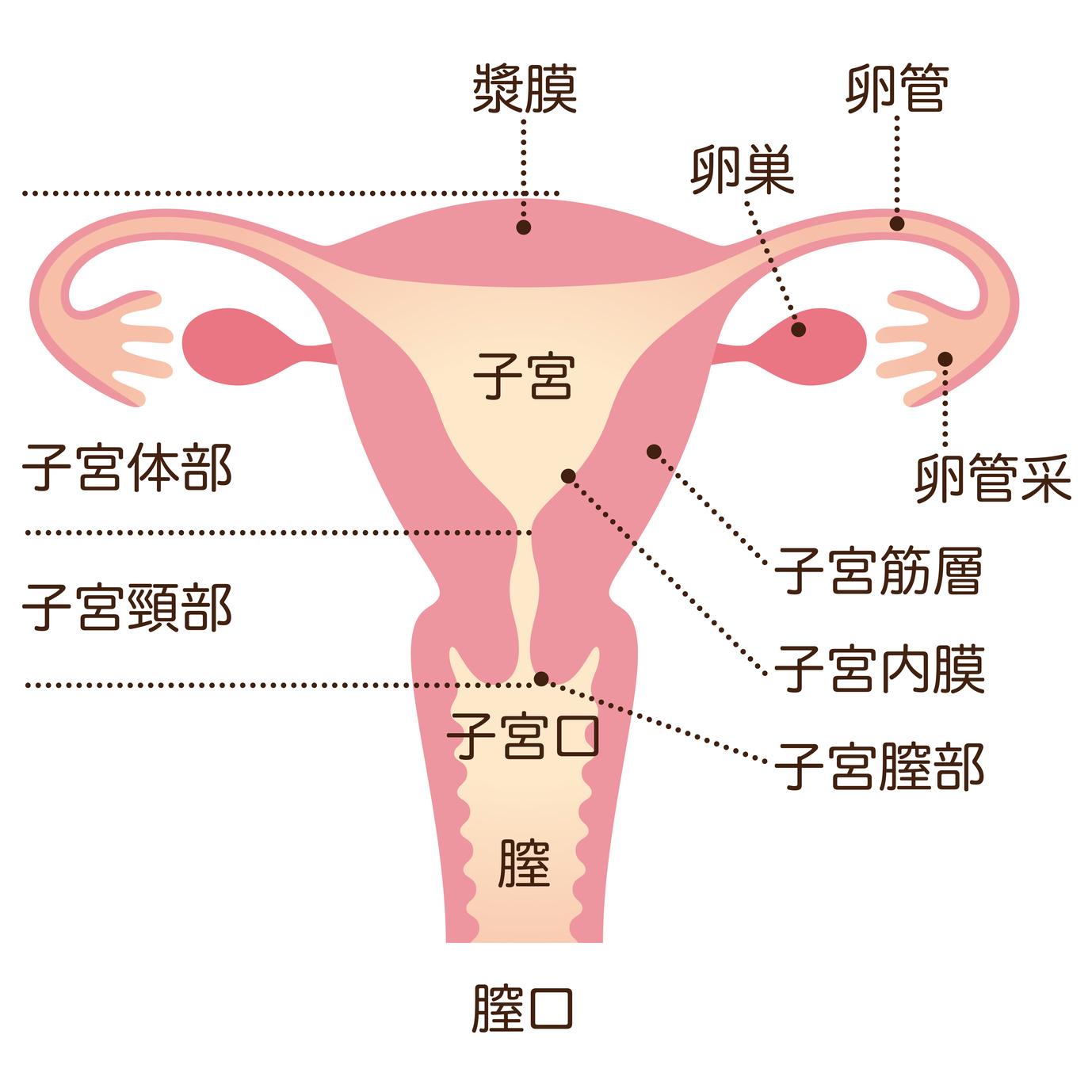 不妊症とは?不妊症の原因は?どのくらいの人が不妊症?