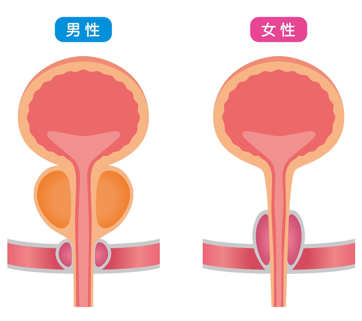 それ、ただの膀胱炎じゃなくて、間質性膀胱炎かも?