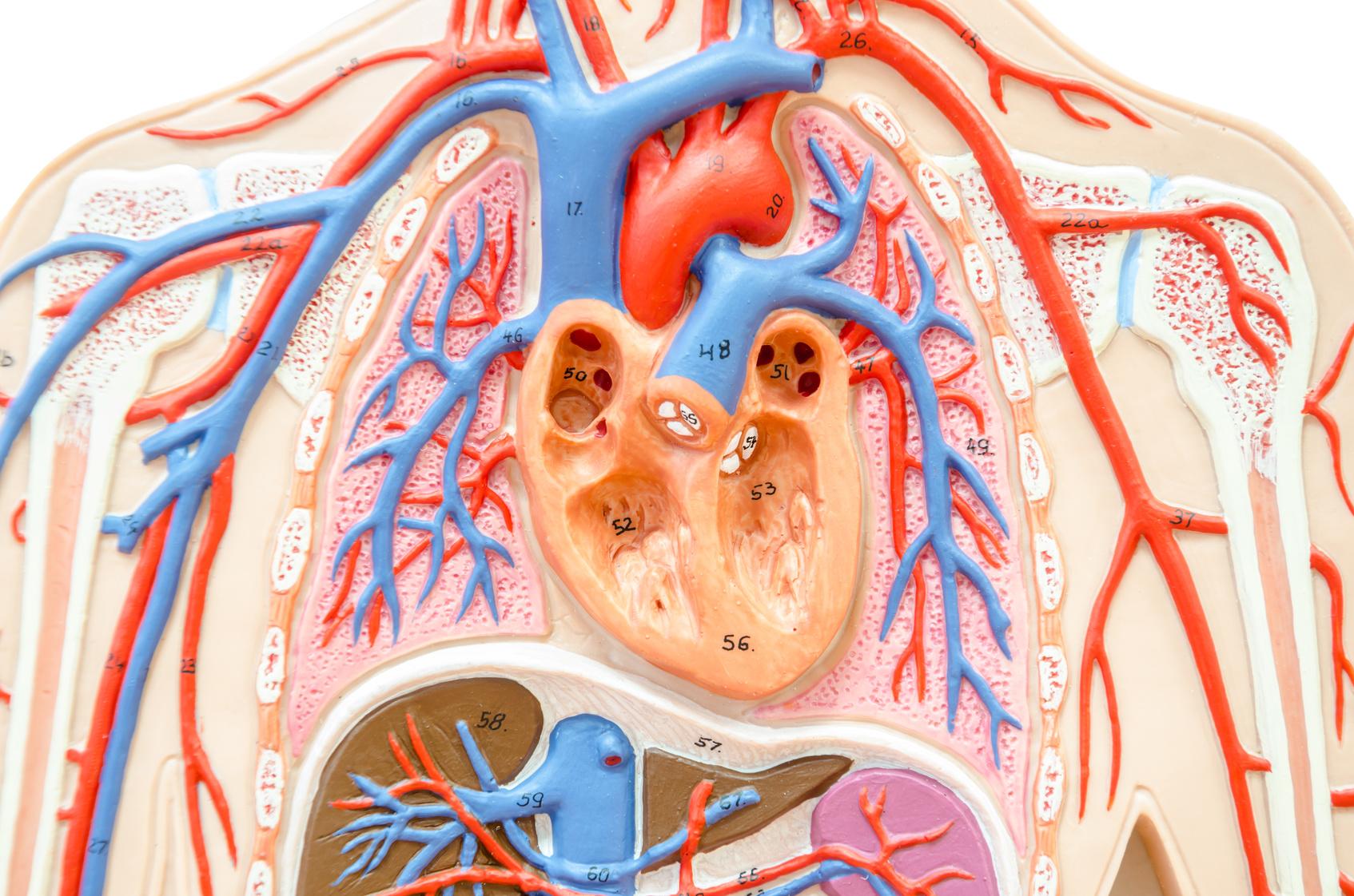 肺高血圧症はまれな病気ですが、やせ薬を内服しているとリスクが上がります!