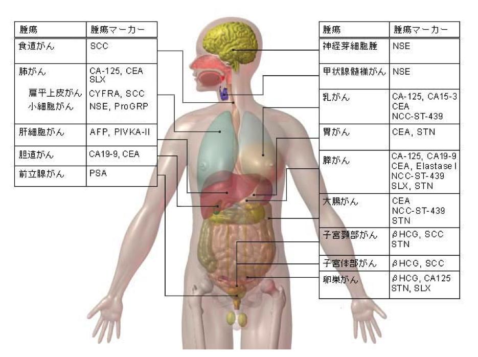 がん 腫瘍マーカー CA-125 CEA SLX CYFRA SCC NSE ProGRP